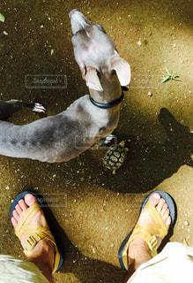 No.229873 犬