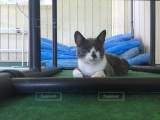 猫の写真・画像素材[230056]