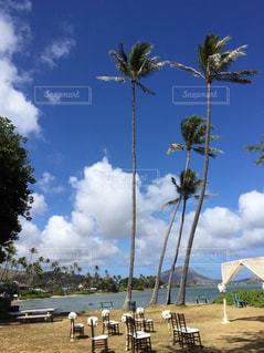 No.230345 椰子の木