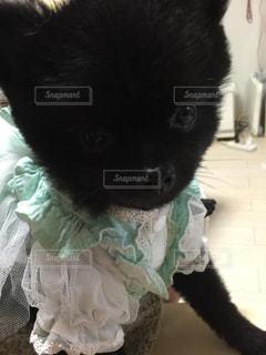 犬の写真・画像素材[230304]