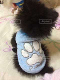 犬の写真・画像素材[230311]