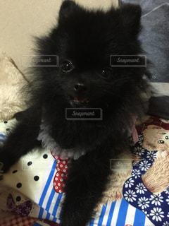 犬の写真・画像素材[232058]
