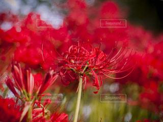 花の写真・画像素材[230623]