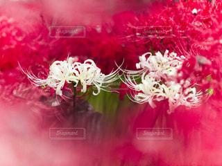 花の写真・画像素材[230624]