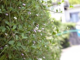 草花の写真・画像素材[233552]