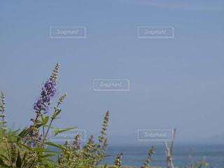 自然の写真・画像素材[233554]