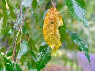 近くの木のアップの写真・画像素材[851599]