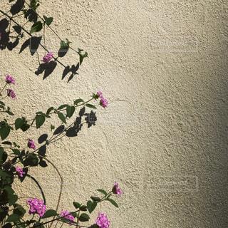 お花のフレームの写真・画像素材[854740]