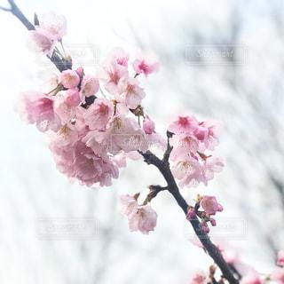 近くの花のアップの写真・画像素材[1077666]