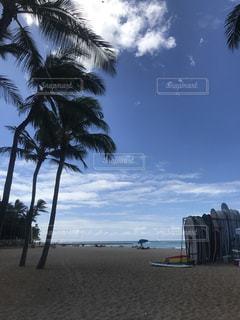 ヤシの木とビーチ - No.796040