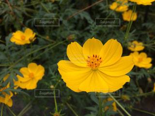 花の写真・画像素材[240974]