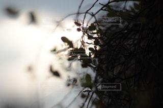 自然の写真・画像素材[233802]