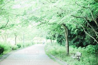 緑溢れる公園のベンチの写真・画像素材[1037586]