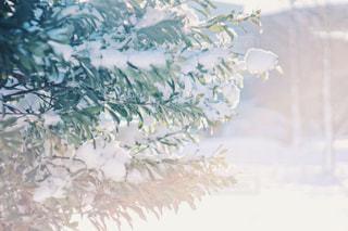 雪の日の写真・画像素材[1037591]