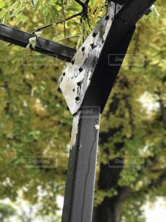 藤のツルを支える柱の写真・画像素材[265590]