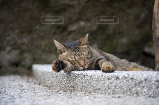 猫の写真・画像素材[230931]
