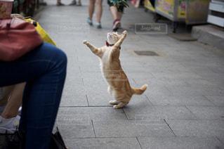 猫の写真・画像素材[230935]