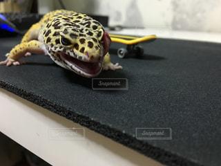 爬虫類の写真・画像素材[231532]