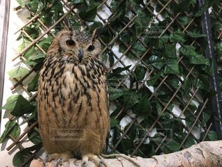 枝の上に座って鳥の写真・画像素材[1058133]