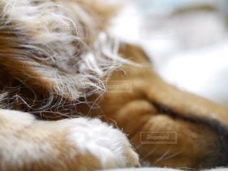 犬の写真・画像素材[17196]