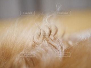 犬の写真・画像素材[17201]