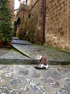 猫の写真・画像素材[311174]