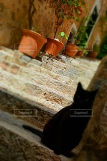 猫の写真・画像素材[520530]