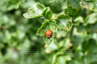 自然の写真・画像素材[520641]