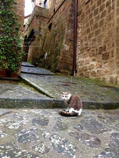 猫の写真・画像素材[535822]