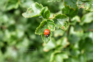 自然の写真・画像素材[538685]