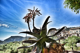 自然の写真・画像素材[539527]