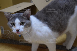 猫の写真・画像素材[232123]