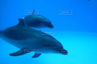 イルカの写真・画像素材[232423]