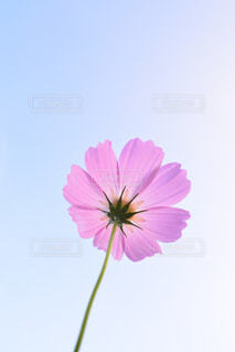 自然の写真・画像素材[233106]