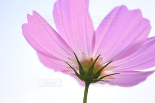 自然の写真・画像素材[233108]