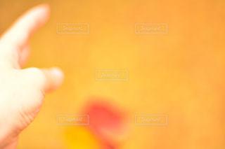 自然の写真・画像素材[262642]