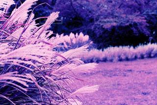 自然の写真・画像素材[265947]