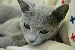 猫の写真・画像素材[274195]