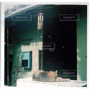 猫の写真・画像素材[320800]