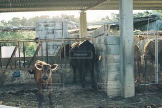 動物の写真・画像素材[324379]