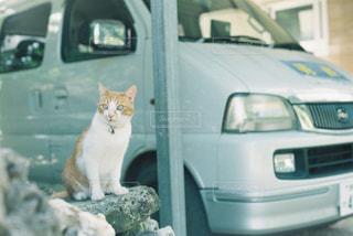 猫の写真・画像素材[324494]