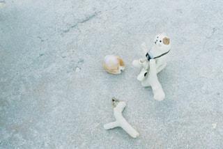 猫の写真・画像素材[324503]