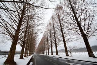 冬の写真・画像素材[339670]