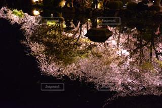 花の写真・画像素材[380402]