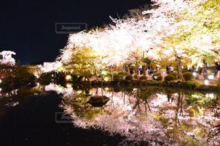 桜 - No.380403