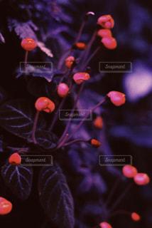 紫 - No.426573