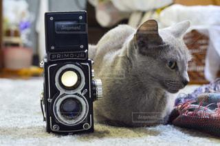 近くに猫のアップの写真・画像素材[1072457]