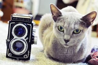近くに猫のアップの写真・画像素材[1072461]