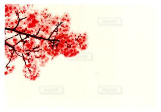 花の写真・画像素材[1091270]
