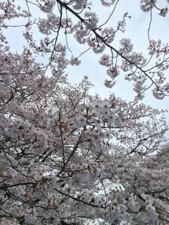 春の写真・画像素材[232757]